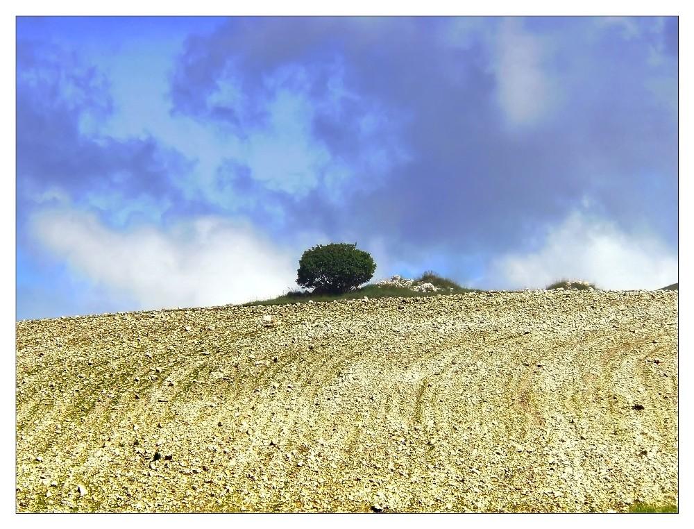 L'albero sulla collina arata