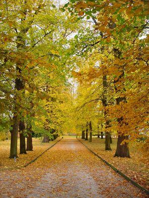 L'allée du parc en automne