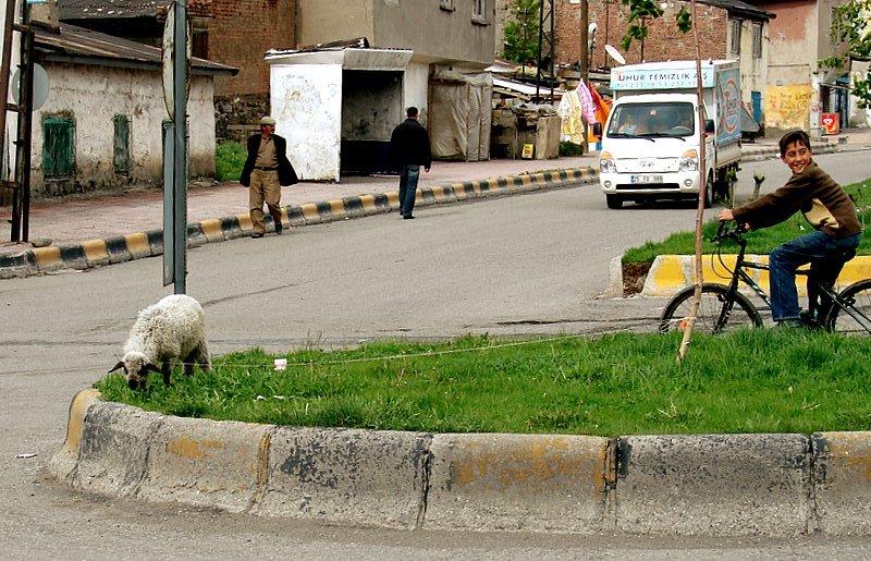 lamb an traffic