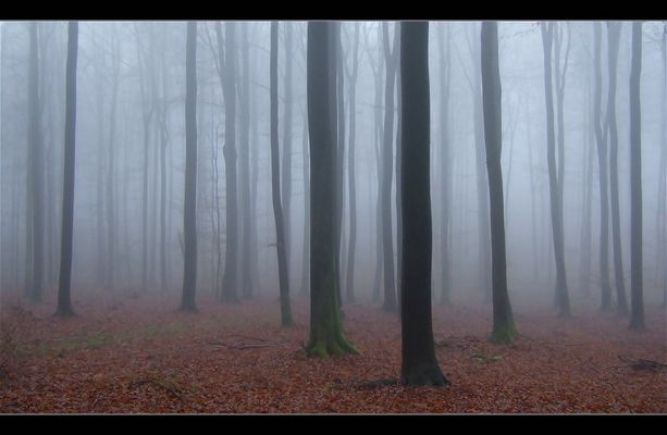 L`ambiance du brouillard