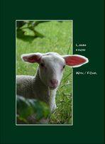 Lamm from Wyk/Föhr