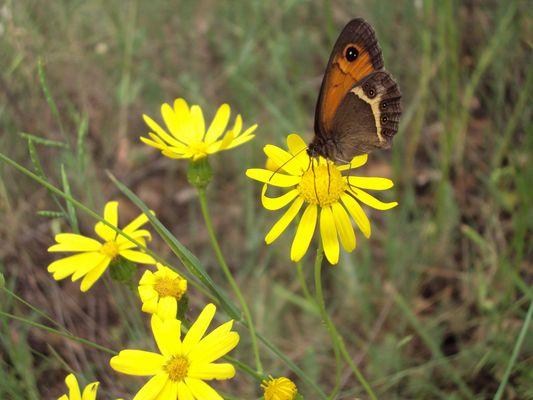 lamour de la nature la nature c la vie