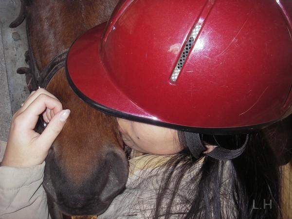 L'amour d'un cheval