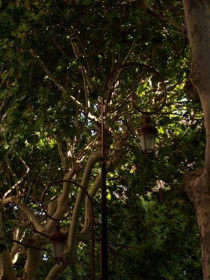 Lampadaire perdu dans les arbres