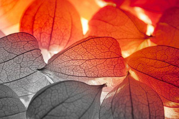 Lampion-Feuer