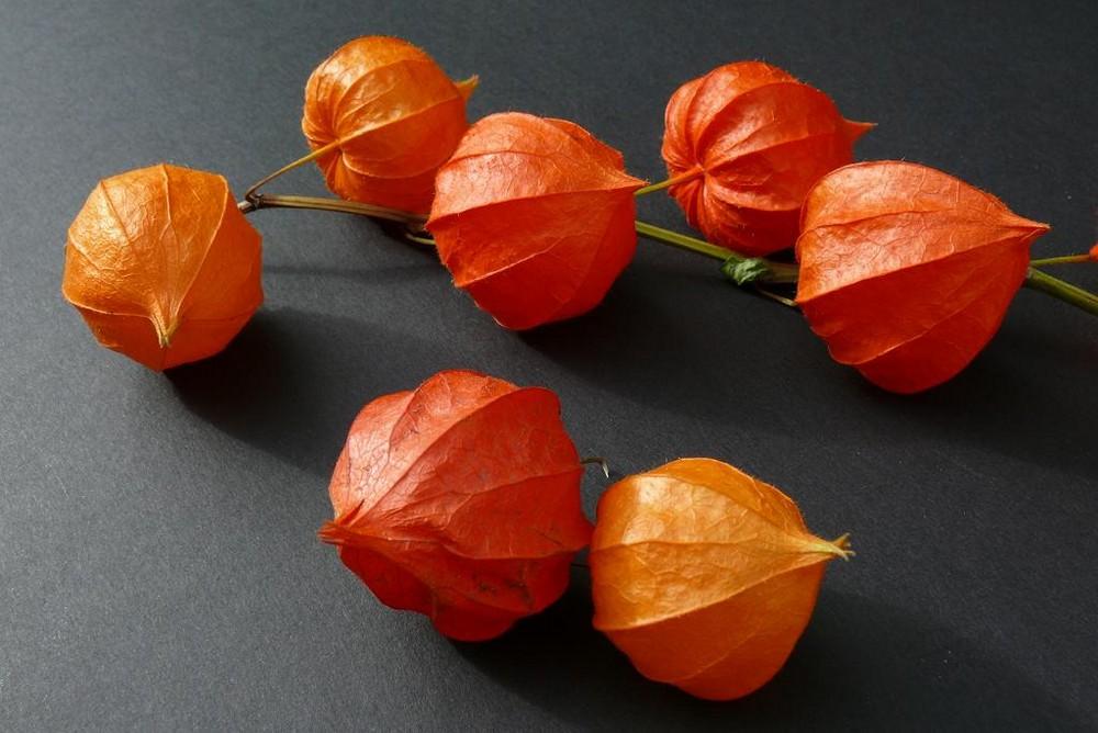 Lampionblume (Physalis alkekengi) - Etwas schärfer