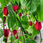 Lampions für eine Gartenparty der Natur