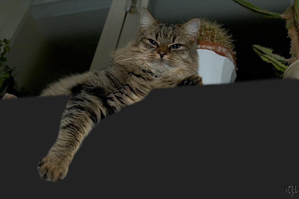 lana kümmerling denkt an alle kätzchen
