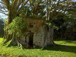 L'ancienne gendarmerie prisonnière des racines des arbres
