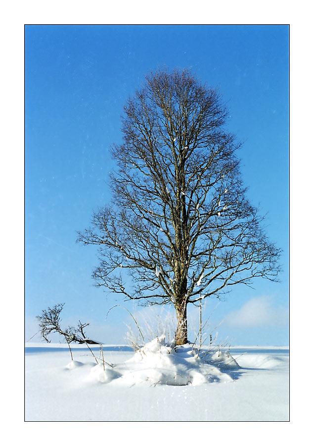 Land-Baum