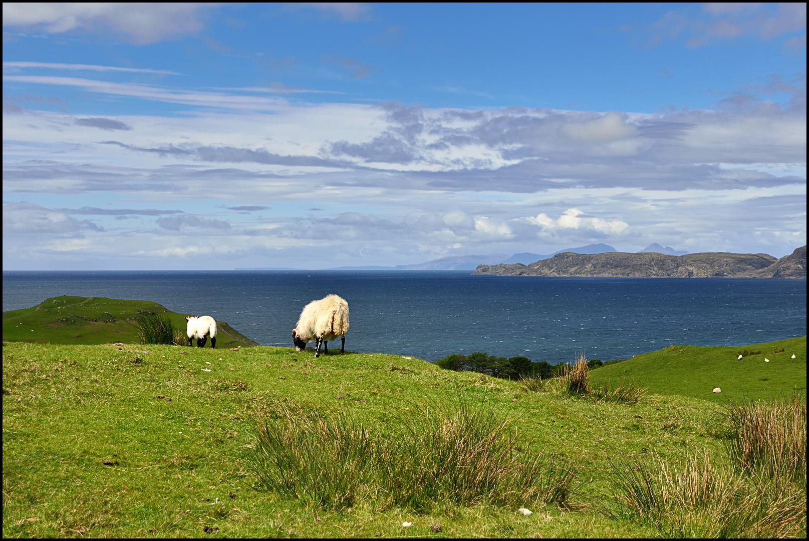 Land der Schafe