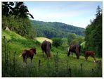 Land der Schwarzwald-Pferde