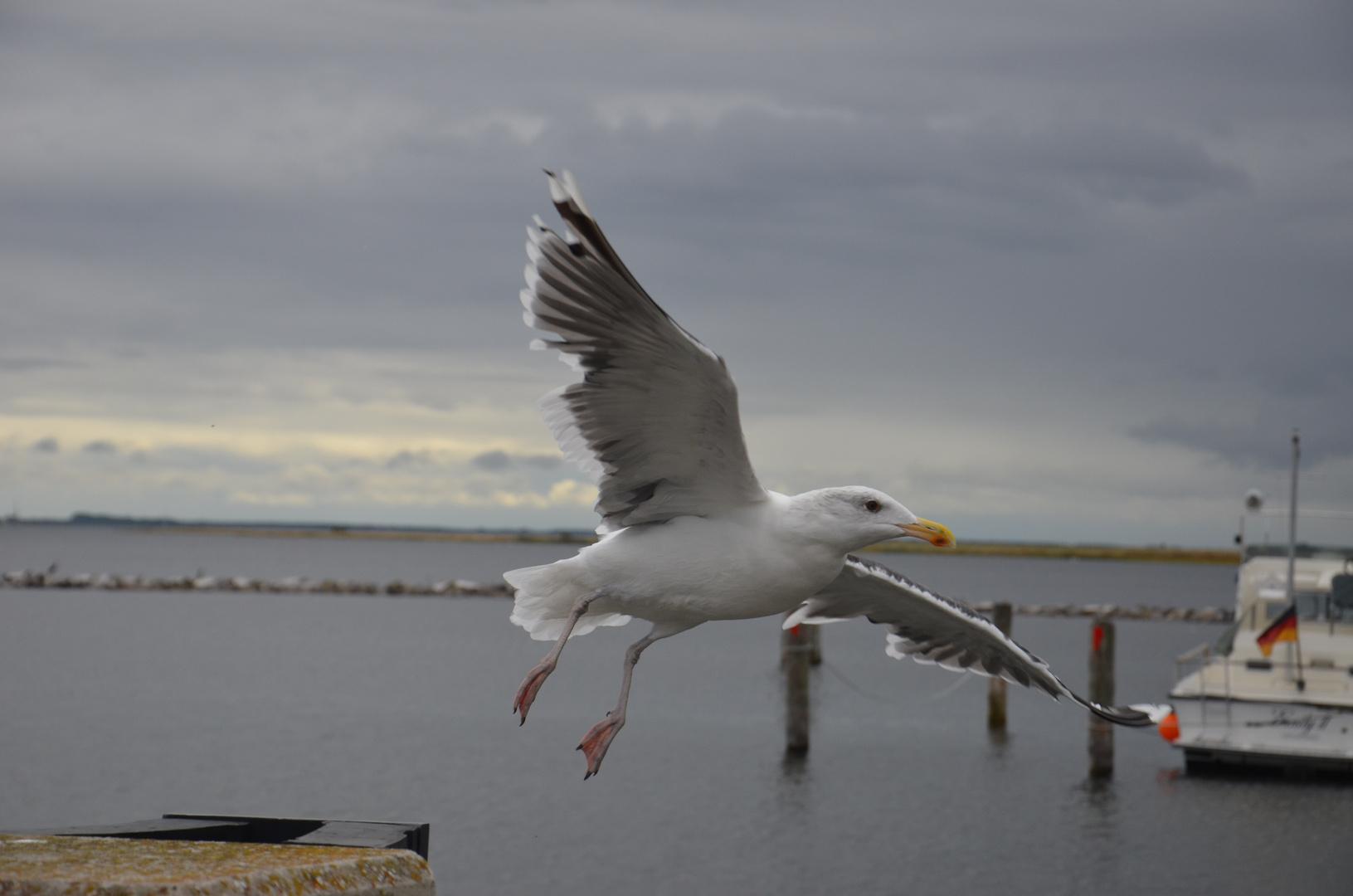 Landeanflug auf Hiddensee