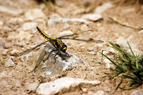 landing dragonfly