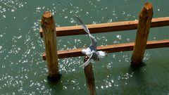 landing on a pole