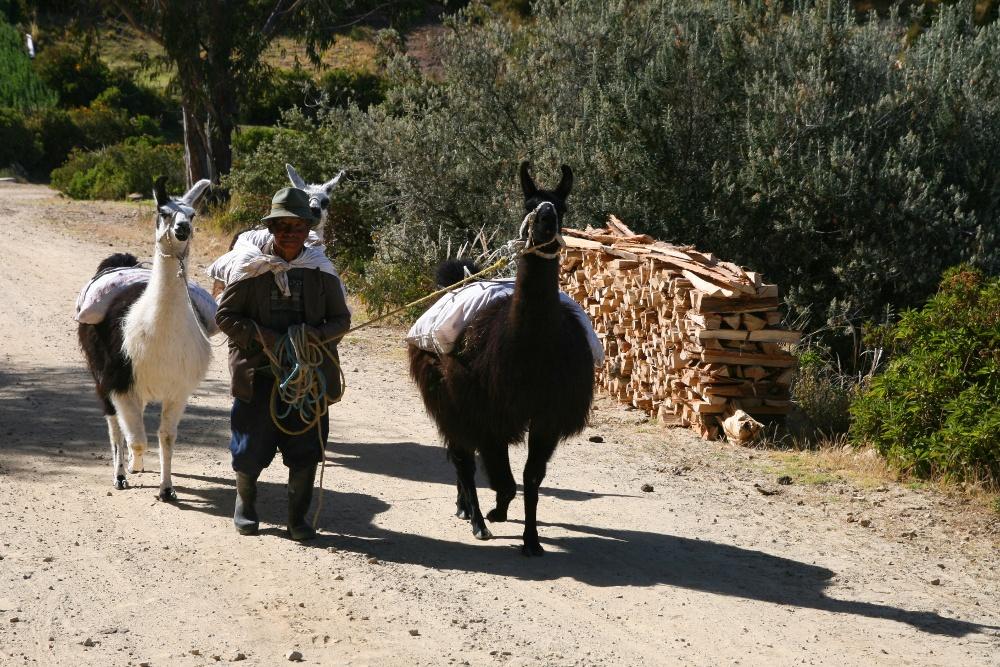 Landleben am Titicacasee II