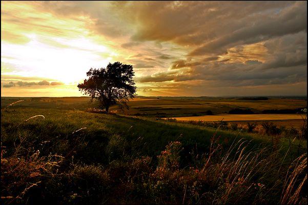 ..:: landscape III ::..