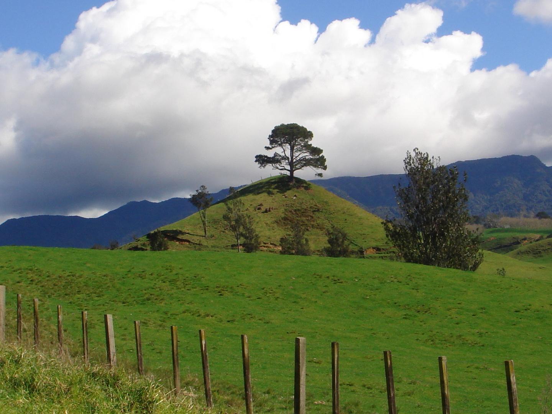 LANDSCAPE TAURANGA NZ