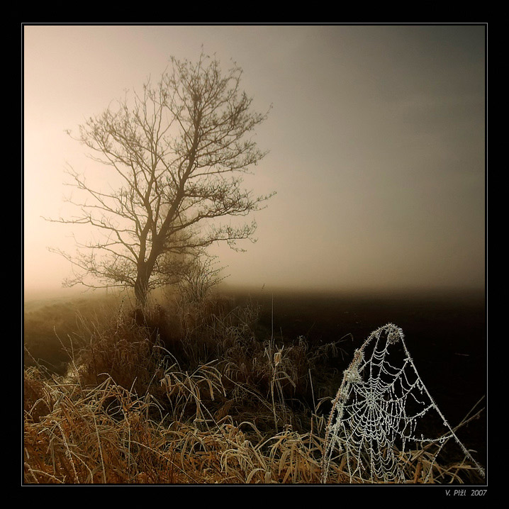 Landscape with spider`s net