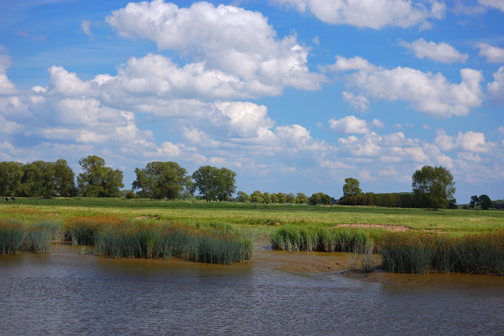 Landschaft an der Wischhafener Süderelbe (Norddeutschland)