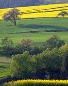 Landschaft bei Bolanden in der Pfalz
