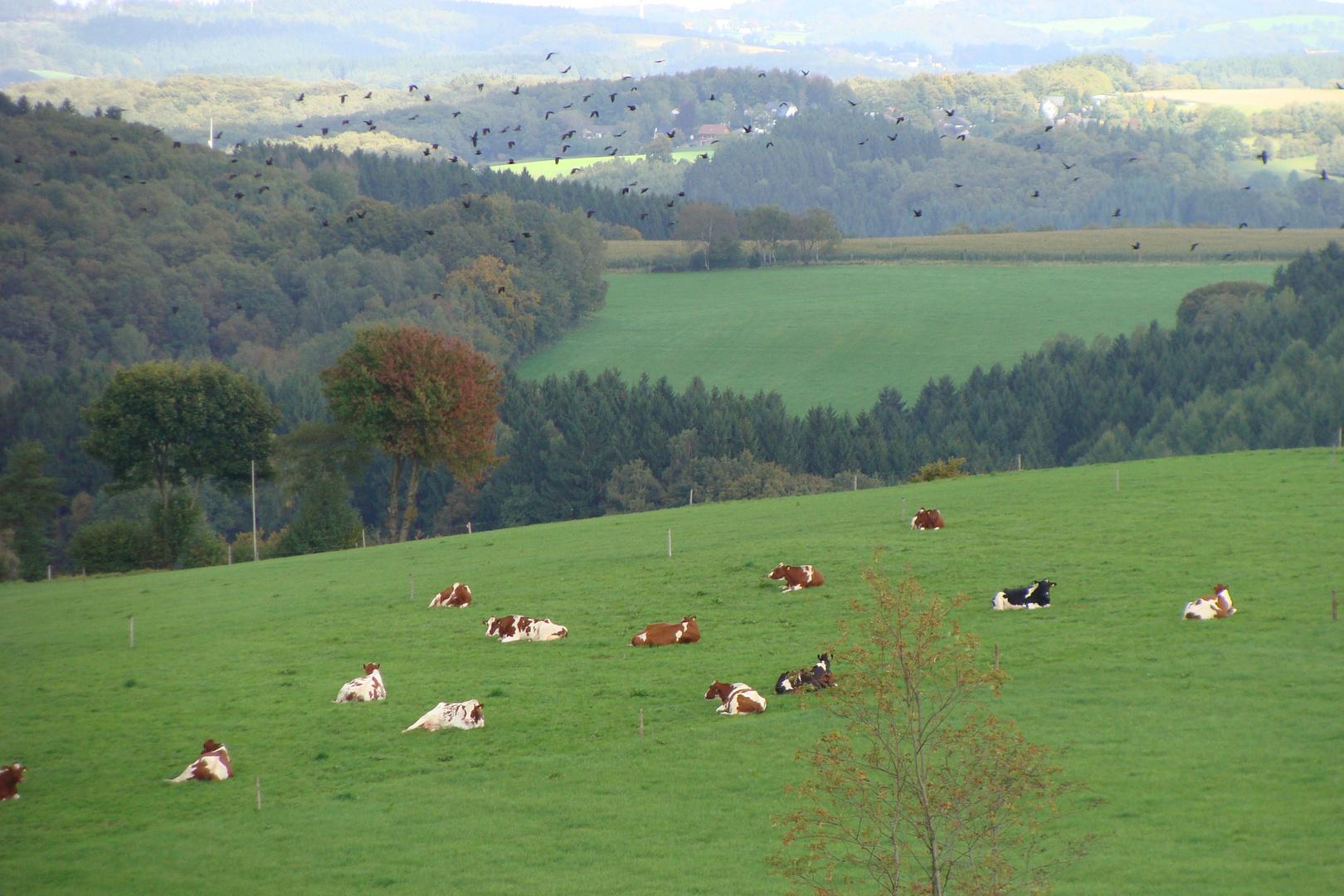 Landschaft bei Glörfeld