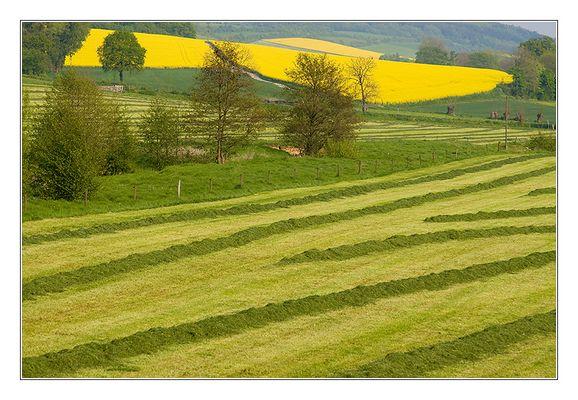 - Landschaft grün-gelb -