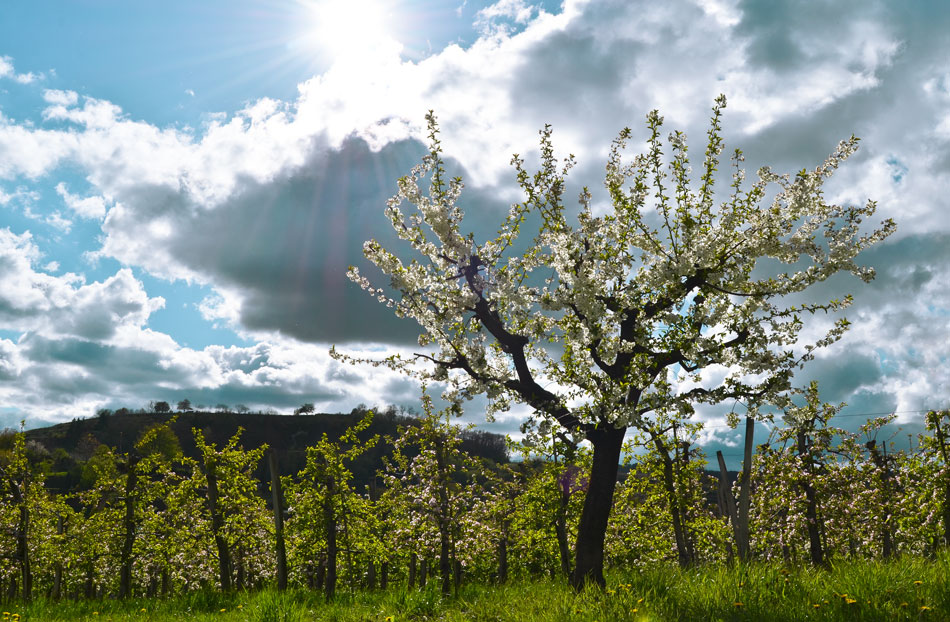 Landschaft im April