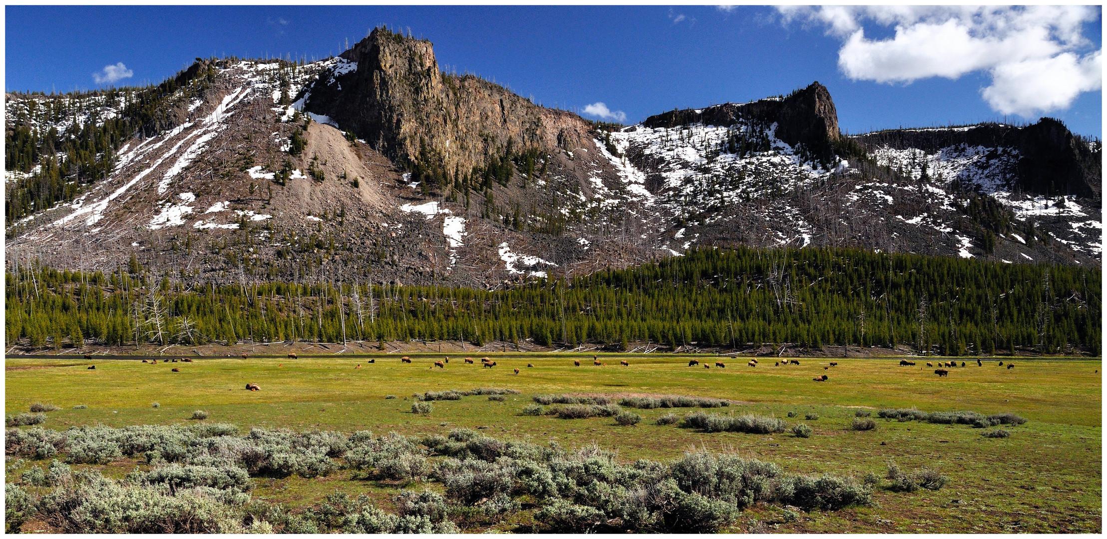 Landschaft im Yellowstone National Park, WY