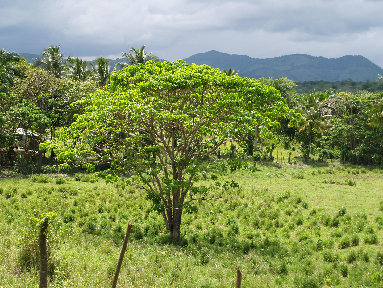 Landschaft in den Tropen