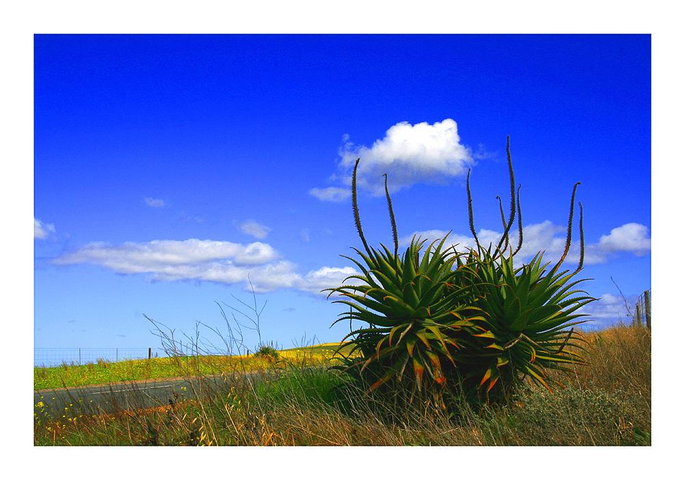 Landschaft in der Kap-Provinz