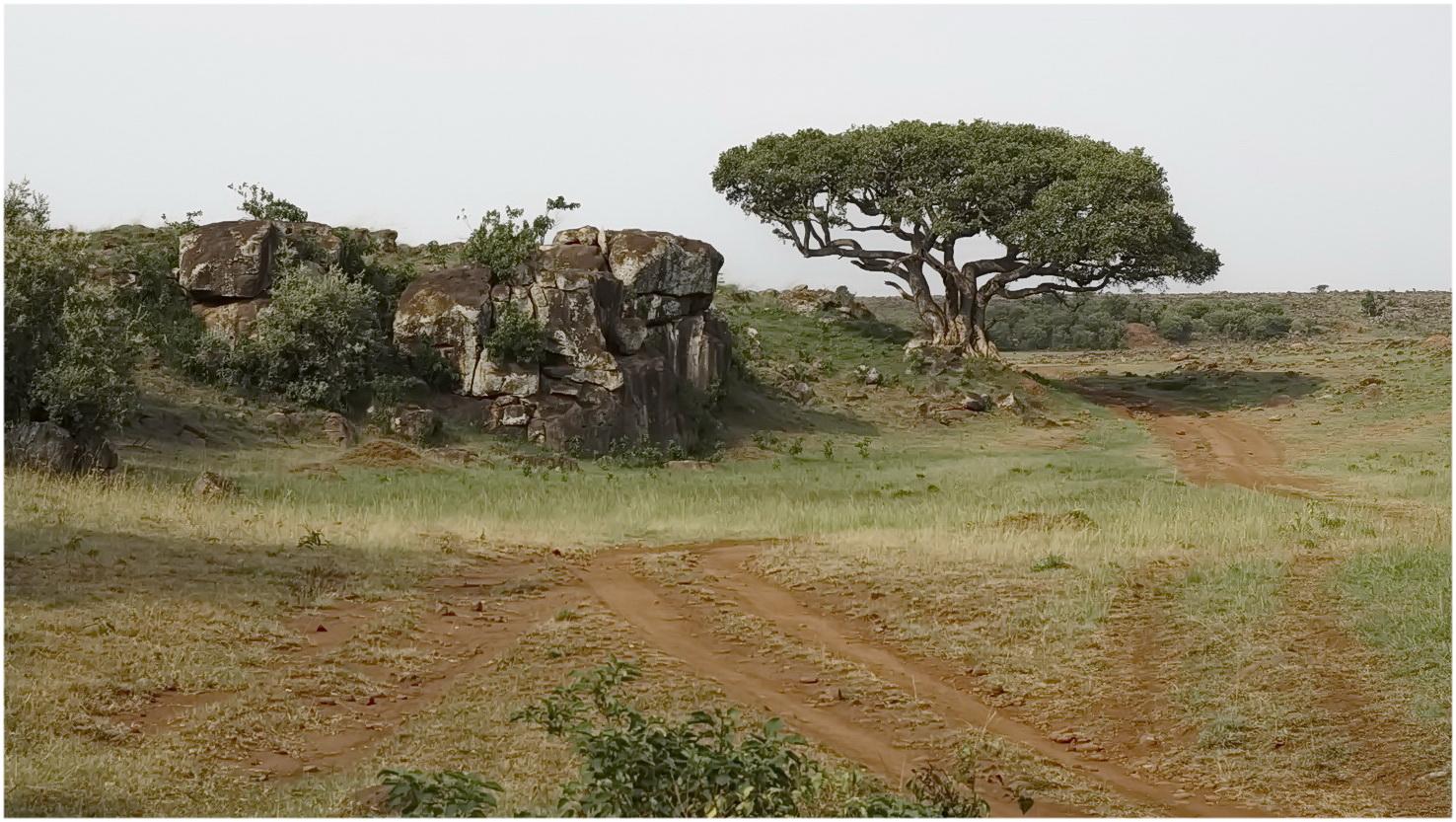 Landschaft in der Masai Mara