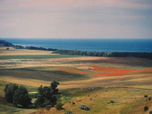 Landschaft in Harmonie