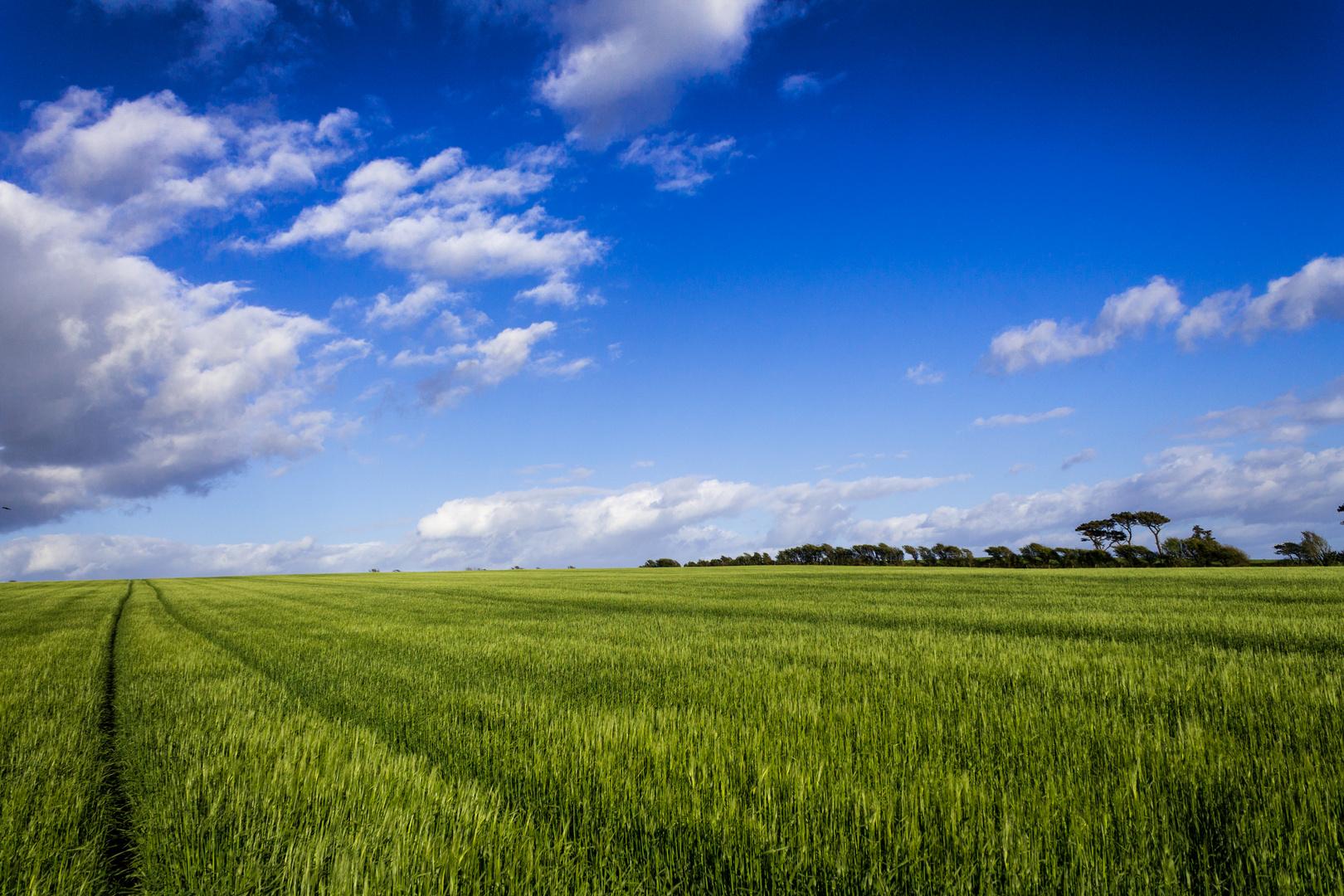 Landschaft Irland #1