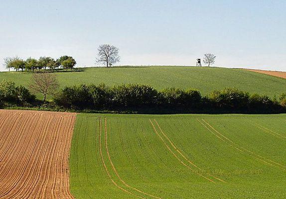 Landschaft mit Hochsitz