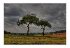 Landschaft mit Pflaumenbäumen