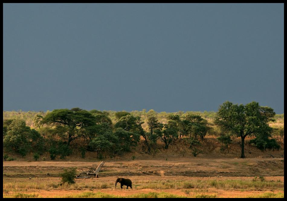 Landschaft mit Tier