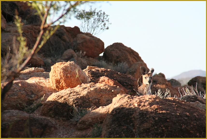 Landschaft mit Tier ... in Australien