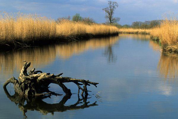 Landschaft Nationalpark Biesbosch (NL)
