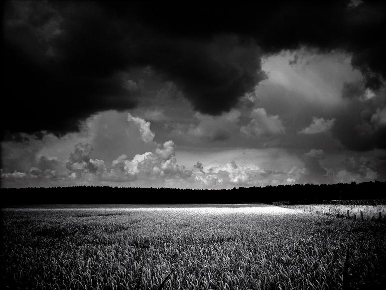 Landschaft s/w