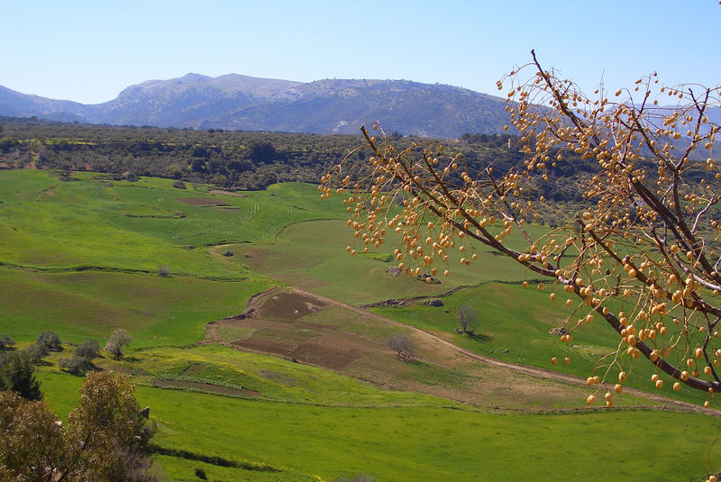 Landschaft um Ronda