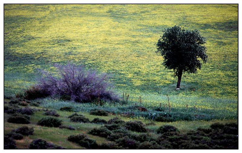 Landschaft (ZYPERN)