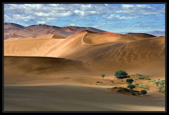 Landschaften in Namibia XVI - Angriff der Pflanzen