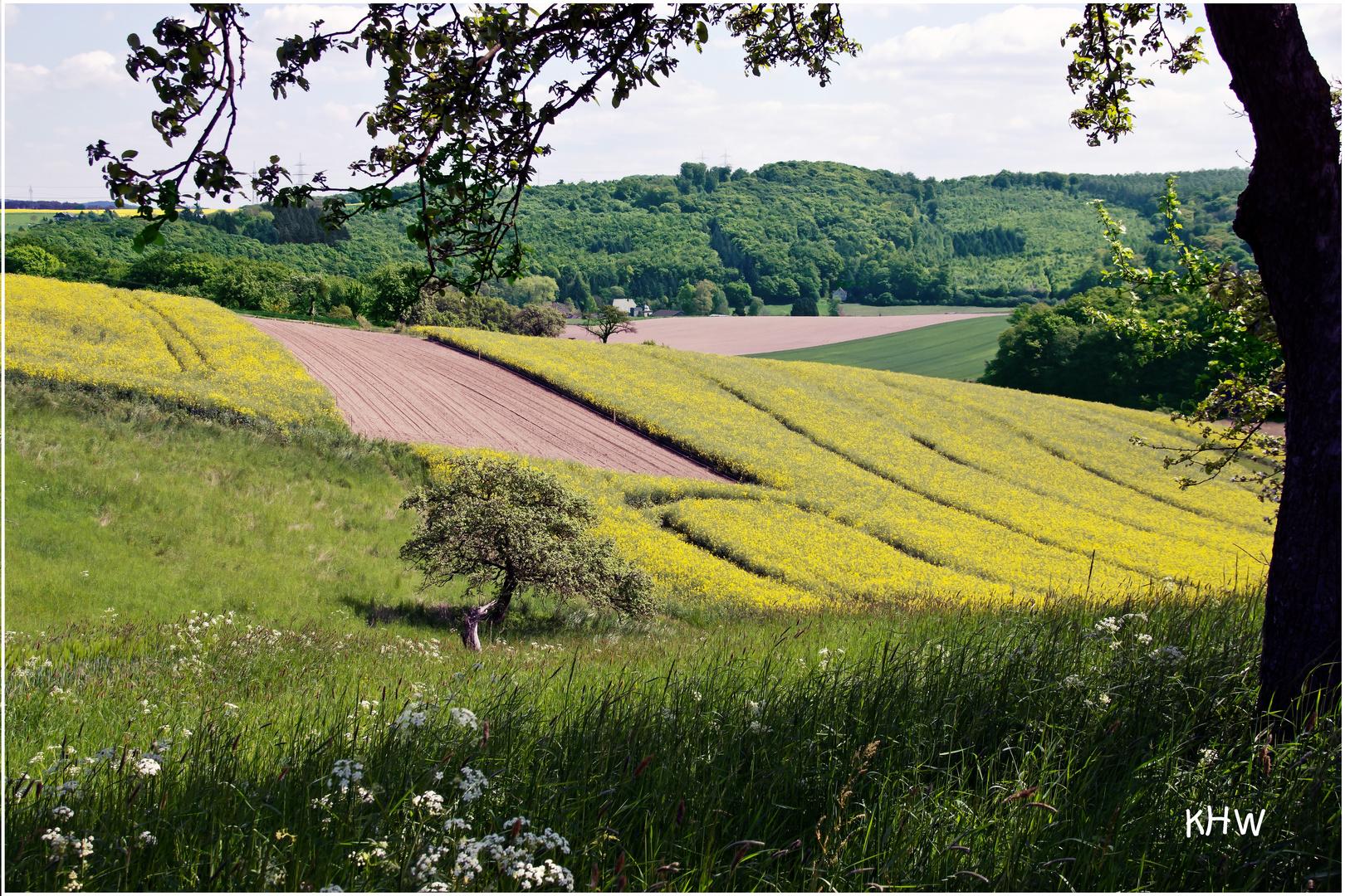 Landschaftsansicht mit Rapsfeld