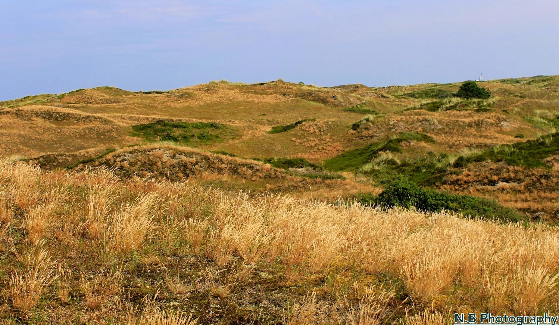 Landschaftsaufnahme auf der Insel Spiekeroog