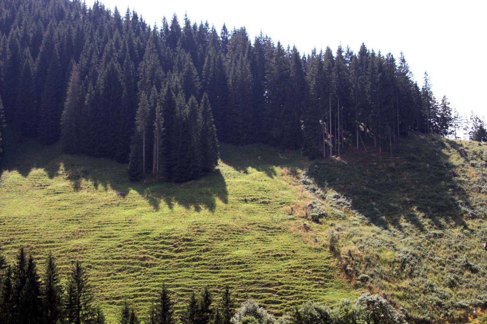 Landschaftsblick in Oberstdorf