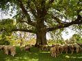 Landschaftsfotografie mit Schwerpunkt Baumfotografie von fotografiecampus
