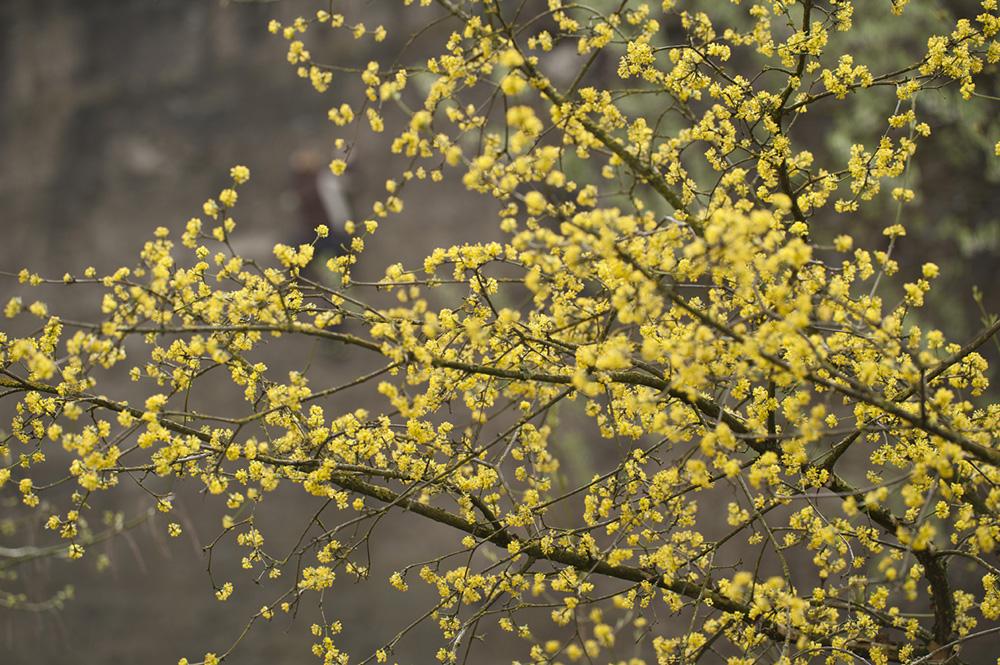 Landschaftspark - Frühling im Kletterpark