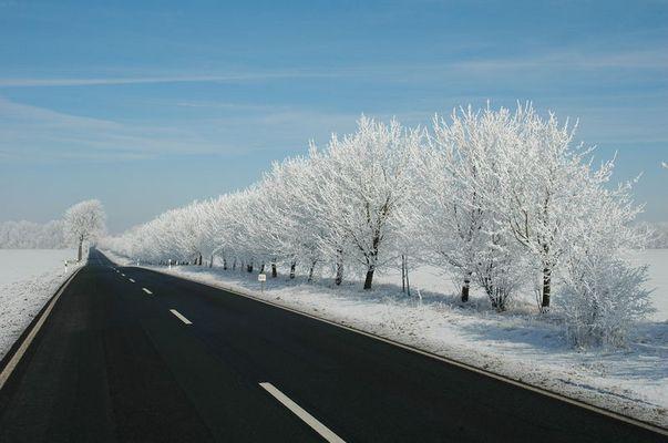 Landstraße in Thüringen mit verschneiten Bäumen