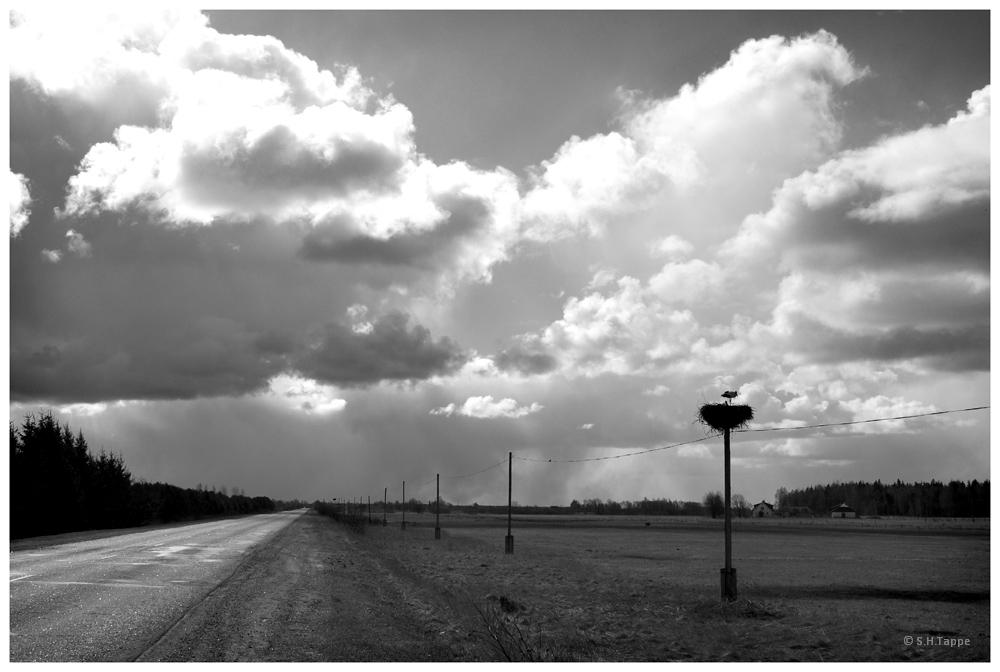 Landstraße mit Storchennest